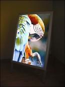 Potykacz na plakaty podświetlany, wewnętrzny B1 1000x700 mm
